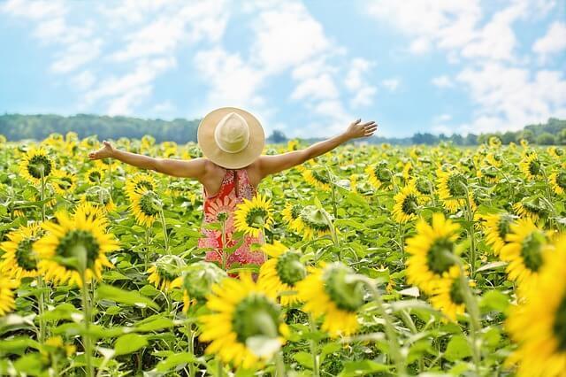 Frau geht durch Sonnenblumenfeld und ist glücklich